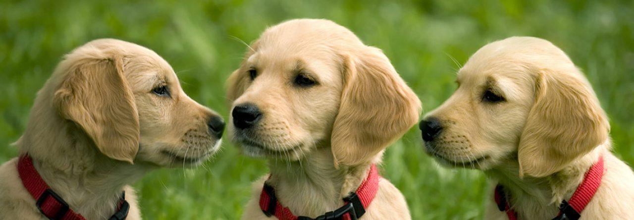 2 hunde kennenlernen